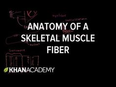 Three Types of Muscle - YouTube