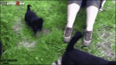 cute cats and dogs gif. more here http://artonsun.blogspot.com/2015/04/cute-cats-and-dogs-gif-more-here.html
