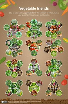 A Guide to Planting for Each Garden Aspect - David Wilson Homes Vegetable Garden Planning, Veg Garden, Edible Garden, Home Vegetable Garden Design, Vegetable Gardening, Garden Design Plans, Garden Shrubs, Permaculture Garden, Sustainable Gardening