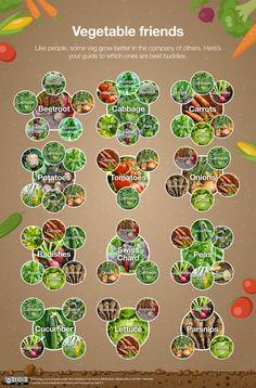 A Guide to Planting for Each Garden Aspect - David Wilson Homes Vegetable Garden Planning, Veg Garden, Edible Garden, Home Vegetable Garden Design, Vegetable Gardening, Garden Design Plans, Garden Shrubs, Permaculture Garden, Gutter Garden