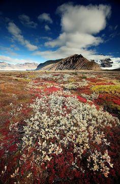 осень в #исландии #icelandcream