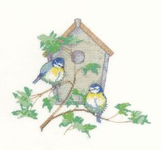 Two pretty little blue tits are setting up home in this cosy location.