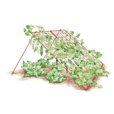 "Large Cucumber Trellis | sturdy, powder-coated steel frame supports heavy loads and has big 4"" grids for easy harvesting. Lean-to design gives you room to sow salad greens under the trellis for an extra crop before your cukes mature."