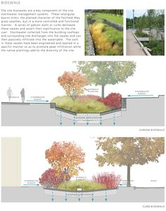 Bioswale concept diagrams // Diagrams by others