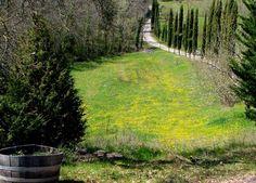 Winery near Florence, Italy
