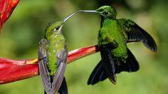 How do hummingbirds reproduce? | Reference.com