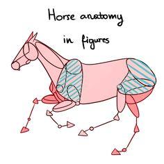 Horse anatomy in figures by konikfryzyjski.deviantart.com on @deviantART