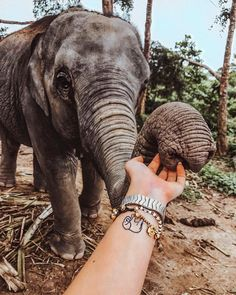 Find images and videos about girl, beautiful and travel on We Heart It - the app to get lost in what you love. Cute Creatures, Beautiful Creatures, Animals Beautiful, Cute Baby Animals, Animals And Pets, Elephant Love, Cute Photos, Thailand Travel, Animal Kingdom