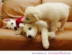 cute Christmas animals I want your cap