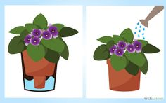 How to Grow African Violets: 6 Steps (with Pictures) - wikiHow