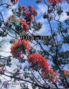 Картинки по запросу guerlain fleur de feu perfume