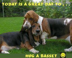 Hug a Basset today