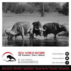 New World Safaris ------------------ VIP Transfers   Tours   Safaris ------ Follow us on Facebook facebook.com/newworldsafaris African Buffalo, Vip, Safari, Hunting, Photographs, Wildlife, Elephant, Tours, Facebook