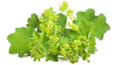 Vrkuta Source by sunnce. Ayurvedic Home Remedies, Natural Remedies, Flower Drawing Images, Oak Leaves, Flower Aesthetic, Pictures To Draw, How To Stay Healthy, Roots, Herbs