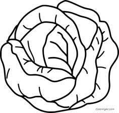 6 free printable Cabbage coloring pages in vector format, easy to print from any device and automatically fit any paper size. Vegetable Coloring Pages, Fruit Coloring Pages, Preschool Coloring Pages, Coloring Sheets For Kids, Colouring Pages, Coloring Books, Vector Graph, Vector Format, Diy Busy Books