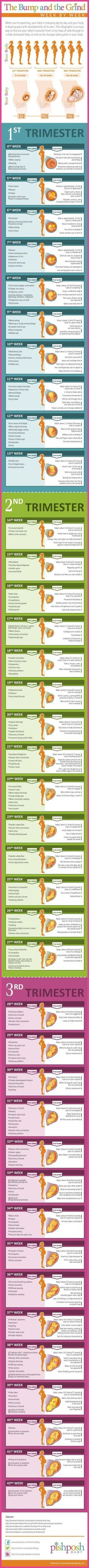 [Pregnancy First] The What, When, Where and How of Employment During Pregnancy -- You can get additional details at the image link. #love #firstpregnancytips #pregnancyfirstmorningsickness