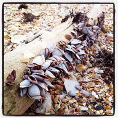 Canaveral national seashore driftwood