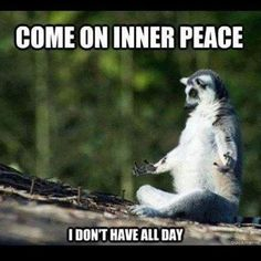 Some mindfulness humour... More