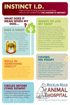 HOW TO GET RID OF TICKS Detect the ticks on your dog or cat. If the head is still in your pet's skin, use . All Dogs, I Love Dogs, Best Dogs, Dogs And Puppies, Doggies, Diy Pet, Dog Facts, Facts About Dogs, Husky Facts