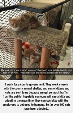 Purrfect!!! More businesses and workplaces should do this!