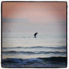 Dolphin in Port Aransas, TX