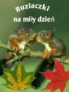 Weekend Humor, Good Morning Funny, Dory, Morning Quotes, Haha, Pictures, Animals, Motto, Squirrels