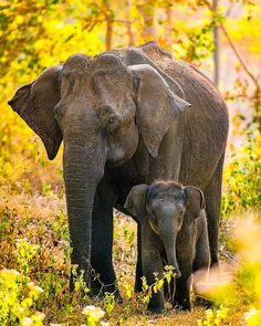 science impact factor cell impact factor nature magazine pdf who owns nature pub Elephants Photos, Save The Elephants, Elephant Family, Elephant Love, Elephant Photography, Animal Photography, Cute Baby Animals, Animals And Pets, Beautiful Creatures