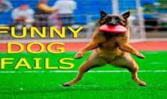 http://www.funny-videos.info/dogs/