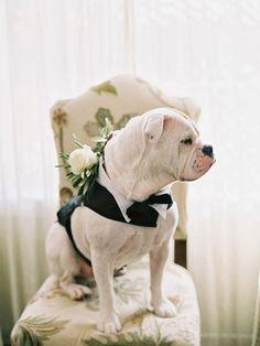 wedding-pets
