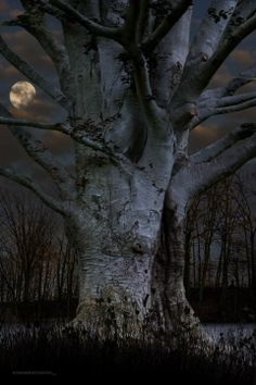 tree by moonlight...#moon #moonlight Tree   natuurbeleving www.desteenakker.nl