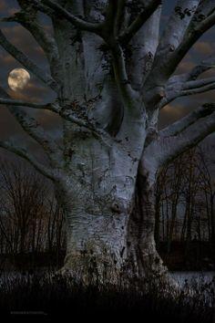 tree by moonlight. Tree natuurbeleving www. Beautiful Moon, Beautiful World, Beautiful Tree Houses, Beautiful Things, All Nature, Amazing Nature, Tree Forest, Dark Forest, Pics Art