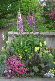 At the entrance to Chanticleer Garden, in Wayne, PA, this dramatic combination lets you know you're in for a treat. Notice there are edibles included? And for vertical accents there's nothing like foxgloves.  All photos taken May 13, 2011 by Susan Harris.