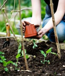 Transfer your seedlings to safety