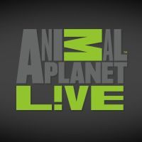 Animal Planet Live - Live Cams of all sorts of animals [cows, kittens, puppies, bugs, ants, whales and much more]