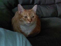 My cat Meadow looking over my shoulder