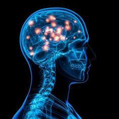 Dendritas, generadoras de impulsos y causantes de gran actividad cerebral. ¿Crees que las dendritas son meras conductoras de impulsos o generan los suyos propios? Descúbrelo!
