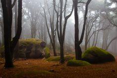 Forest Photograph - Wonderland by Jorge Maia Natural Park, Prints For Sale, Landscape Photography, Horses, Wall Art, Nature, Artwork, Inspiration, White Balance