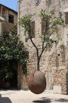 Tree hanging in Jaffa, Israel The Main Entrance to the W Tel Aviv Residences Own a Piece of History - www.wtelavivresidences.com