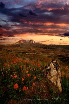 """Rebirth by Rick Parchenon 500px○ILCE-A7r-iso100, 1709✱2560px-rating:99.5☀""""The landscape near Mt. St. Helens is heavily scarred by the lava/mud flows from 34 years ago but signs of rebirth are all around.The tenacity of nature will always impress me. I was a bit worried by the cloudy conditions but the sun was able to peak through the clouds just enough to light up the peak with some very filtered and faded sunlight. Shot near the Johnson Ridge Observatory. .""""Photographer:Rick…"""