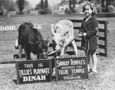 Actress Shirley Temple posing for a publicity photograph with two cows from Adohr Farms in Reseda, circa 1937. Adohr Farms Collection.