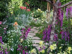 Foxgloves on a garden path #garden