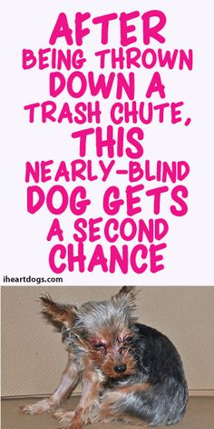After Being Thrown Down A Trash Chute, This Nearly-Blind Dog Gets A Second Chance
