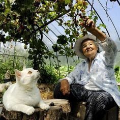 Miyoko Ihara has been taking photographs of her grandmother, Misao and her beloved cat Fukumaru since their relationship began in Their closeness has been captured through a series of lovely photographs. Crazy Cat Lady, Crazy Cats, I Love Cats, Cool Cats, Amor Animal, Son Chat, Matou, Best Friends For Life, Tier Fotos