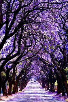Road less traveled: Jacaranda City, Republic of Zimbabwe.