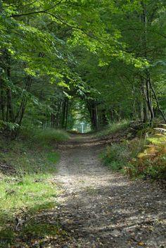 Les Carrières de Montigny 2006   Venez découvrir les forêts de l'Oise !   © Oise Picardie / Philippe LOBGEOIS Oise, Philippe, Scenery, Country Roads, Trees, Nature, Walking, Naturaleza, Landscape