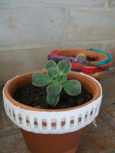 Suculentas y mini cactus