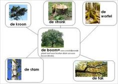 Delen van een boom Autumn Crafts, Creative Kids, School, Dutch, Plants, Biology, Dutch Language