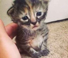 The kitten was born as part of a litter recently and has been nicknamed Purrmanently Sad Cat :( | This Is Quite Possibly The Saddest Cat You'll Ever See