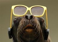 25 Animals With Glasses – Holytaco