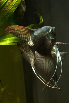 this is the coolest fish i have ever seen in my entire life.